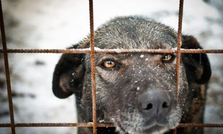 Dem Hund Freiheit schenken: Hundezwinger selber bauen!