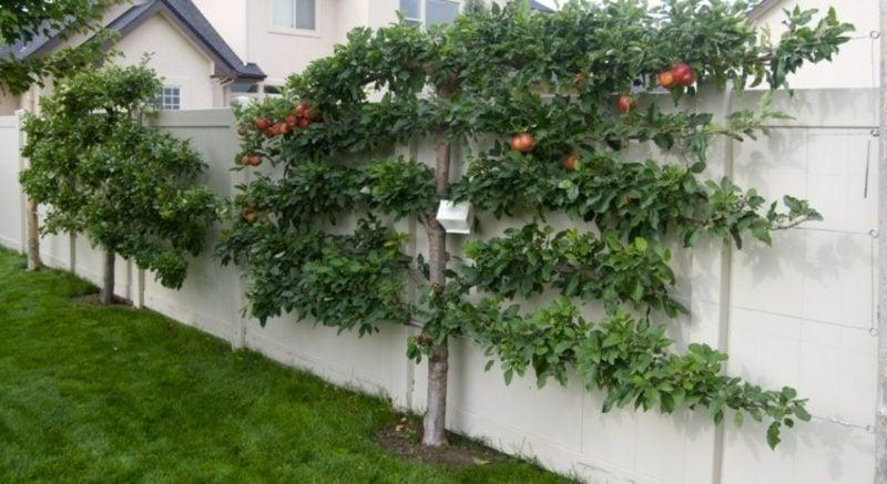 Apfelbaum Spalier kreative Ideen gartengestaltung