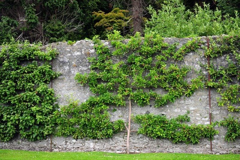 Obstbaum Gartenzaun herrlicher Look