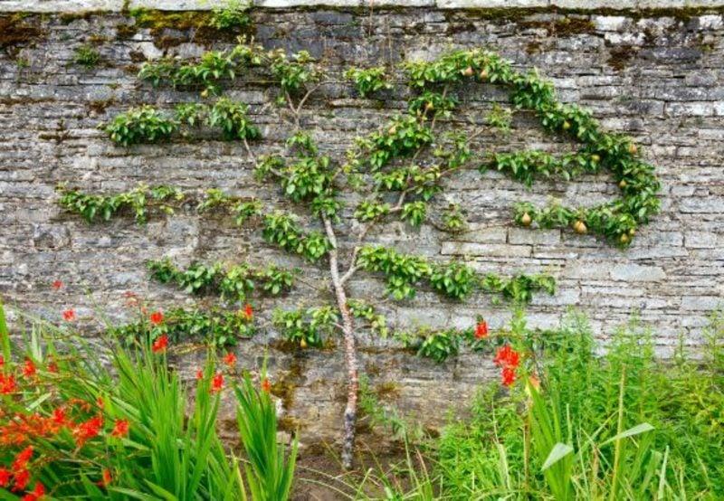 Spalier Gartenzaun Obstbaum origineller Look