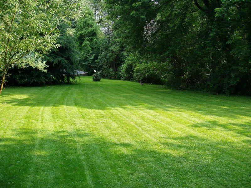 gepflegte Rasenfläche vertikutiert