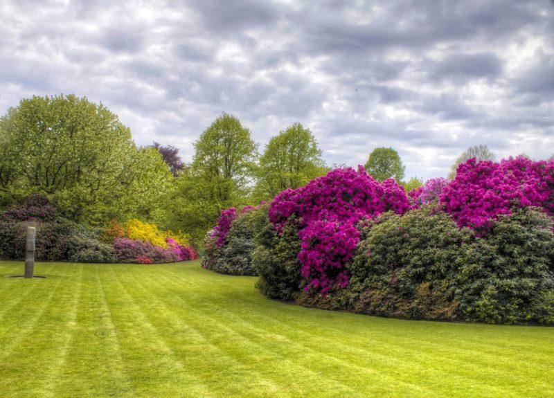vertikutierter Rasen herrlicher Look Garten