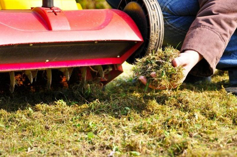 richtig vertikutieren Rasenreste