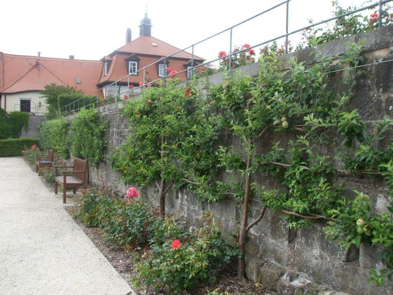 Gartengestaltung Ideen Spalierobst anbauen