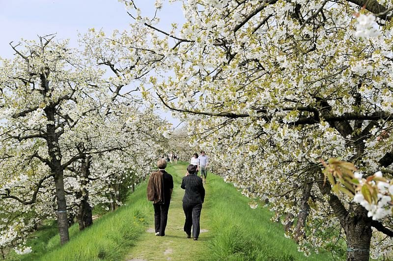 Kalorienverbrauch beim Walken Spaziergang in der Natur