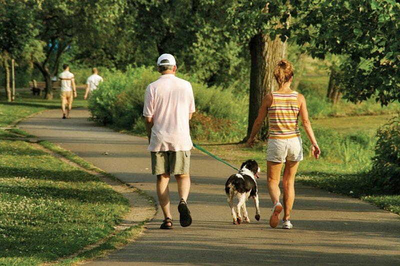 Kalorienverbrauch beim Walken Gesundheit mit dem Hund spazieren gehen