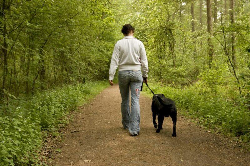 mit dem Hund spazieren gehen Kalorien beim Walken verbrennen