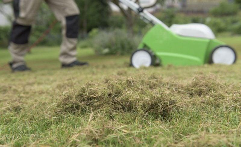 den Rasen richtig vertikutieren Gartensarbeit Tipps