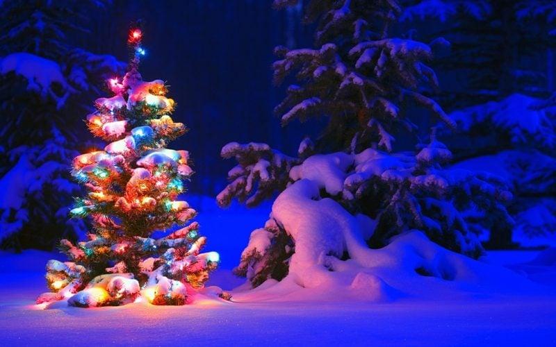 Weihnachtsbaum in der Wald kreative Ideen zu Weihnachten