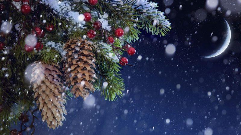 Weihnachtslieder O Tannenbaum