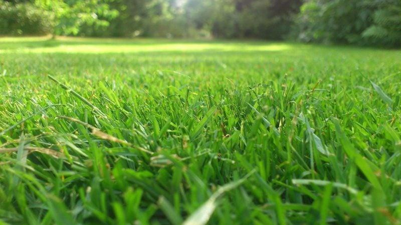 Rasen gut gepflegt vertikutiert