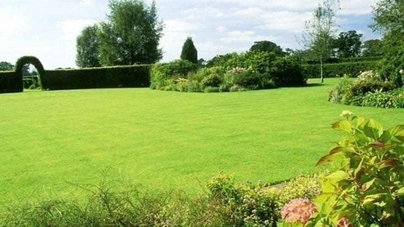 grosse Rasenfläche richtig vertikutieren