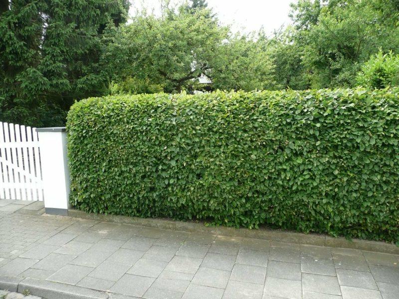 Gartengestaltung Ideen Sichtschutz Hecke