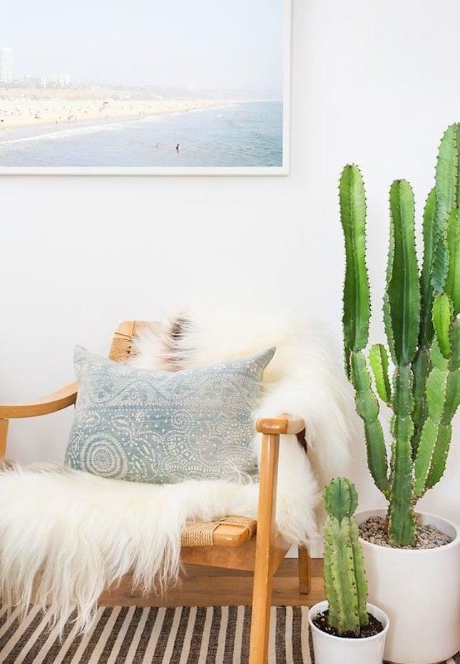 kaktus blumendekoration für ihr zuhause dekoideen
