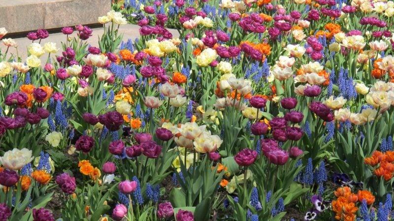 Betrachtet das Erwachen des Frühlings