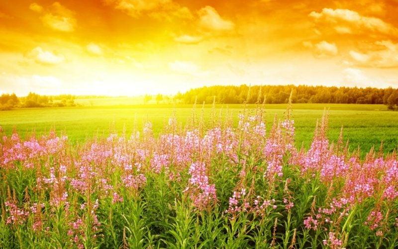 Fruhlingsbilder Blüten des Frühlings