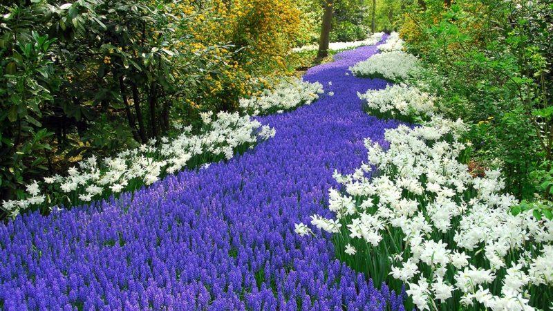 Die heißestes Farben des Frühlings Betrachtet das Erwachen des Frühlings