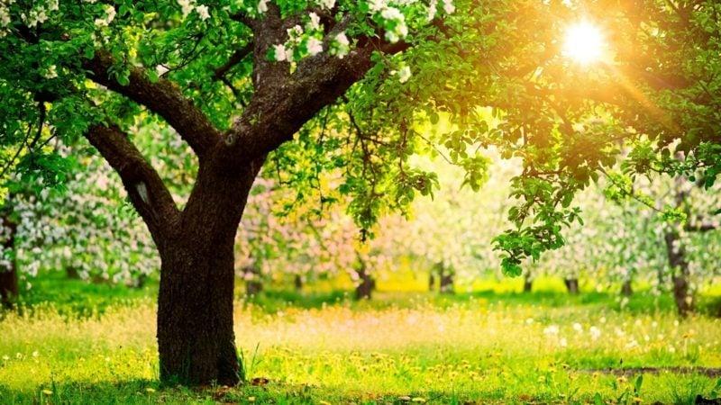 Rückkehr des Frühlings Grün