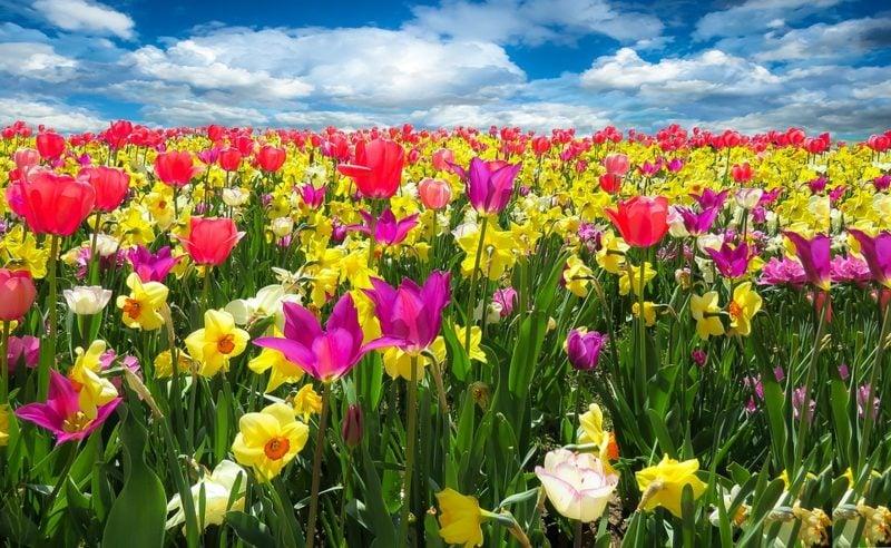 Die Farben des Frühlings Fruhlingsbilder