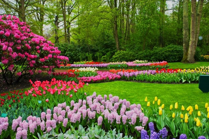 Die volle Pracht des Frühlings Das erste Picknick dieses Frühlings