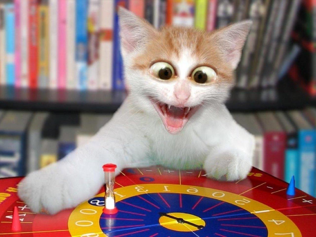 lustige katzen bilder süße katzenbilder