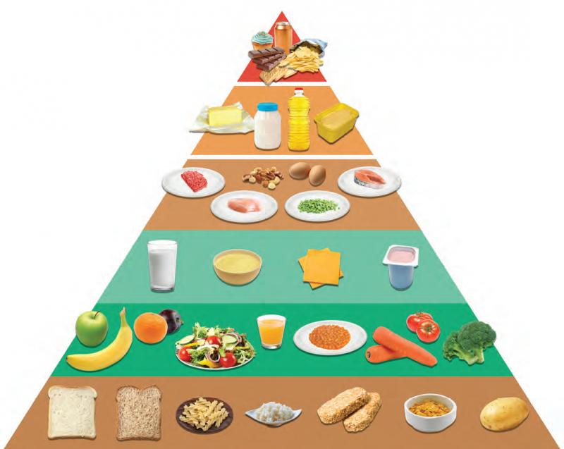 Die Ernährungspyramide - die Grundlage jeder Diät