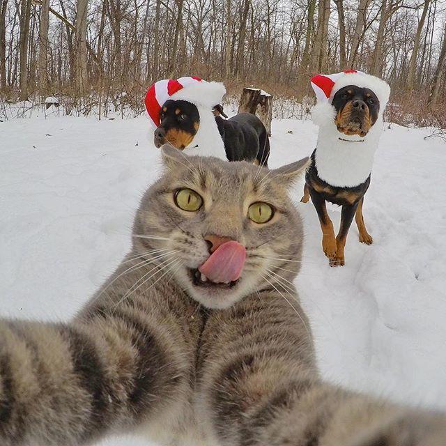 Katzen Bilder Die Sie Zum Lachen Bringen Haustiere Zenideen