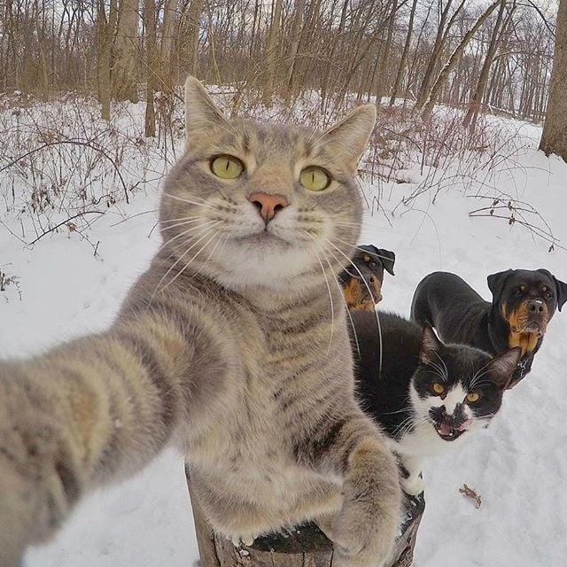 lustige katzen bilder süße katzenbilder selfie