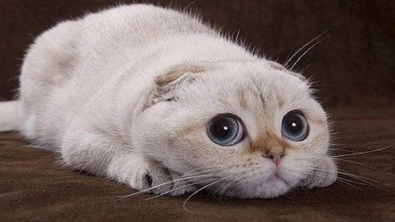 lustige katzen videos zum - photo #42