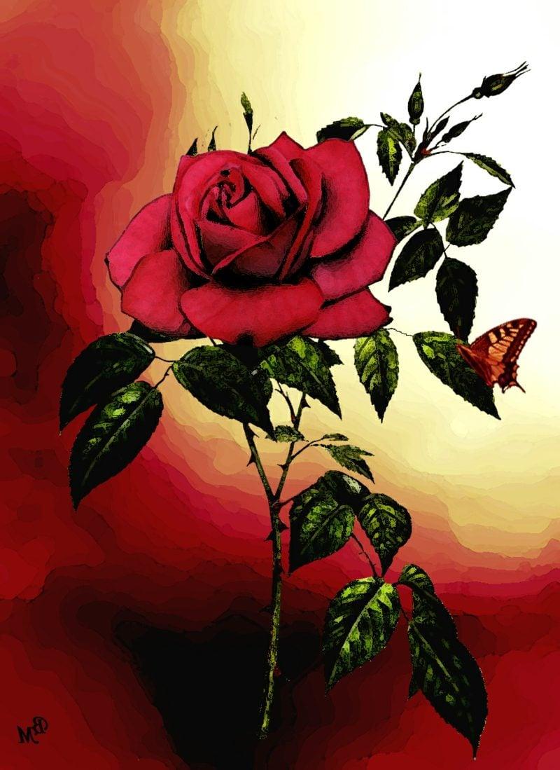 rote rosen folgen rote rosen forum rote rosen lied