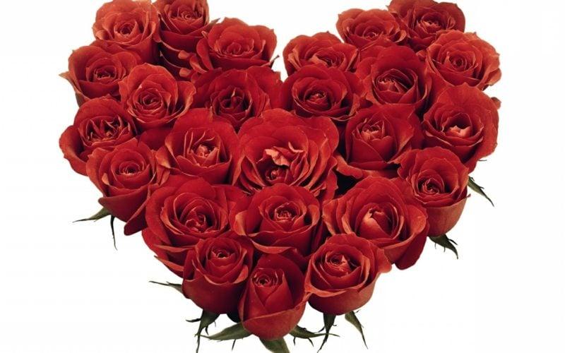 rose herz valentingstag