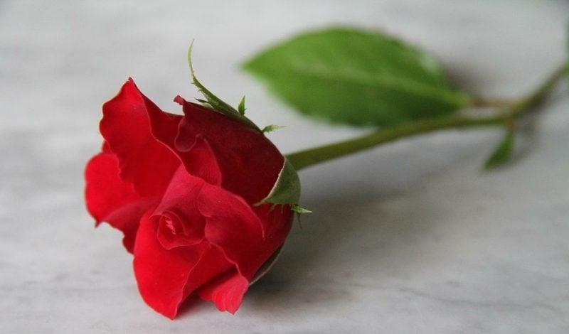 Eros-Prinzip Lotus Mandala Pflanzen