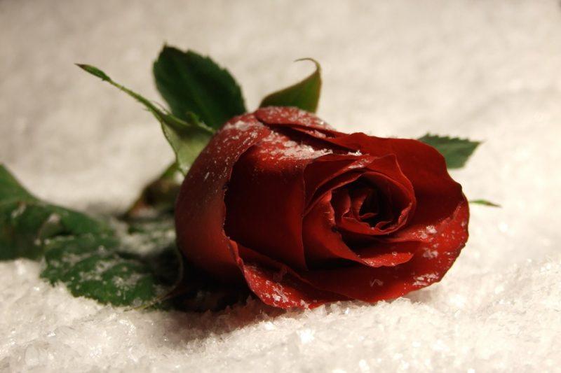 Für alle, die etwas mit Liebe zu tun haben, ist der Valentinstag eine Gelegenheit, ihre Gefühle durch die Blume zu sagen