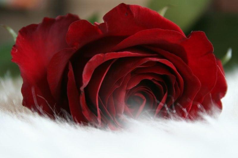 Tag der Verliebten