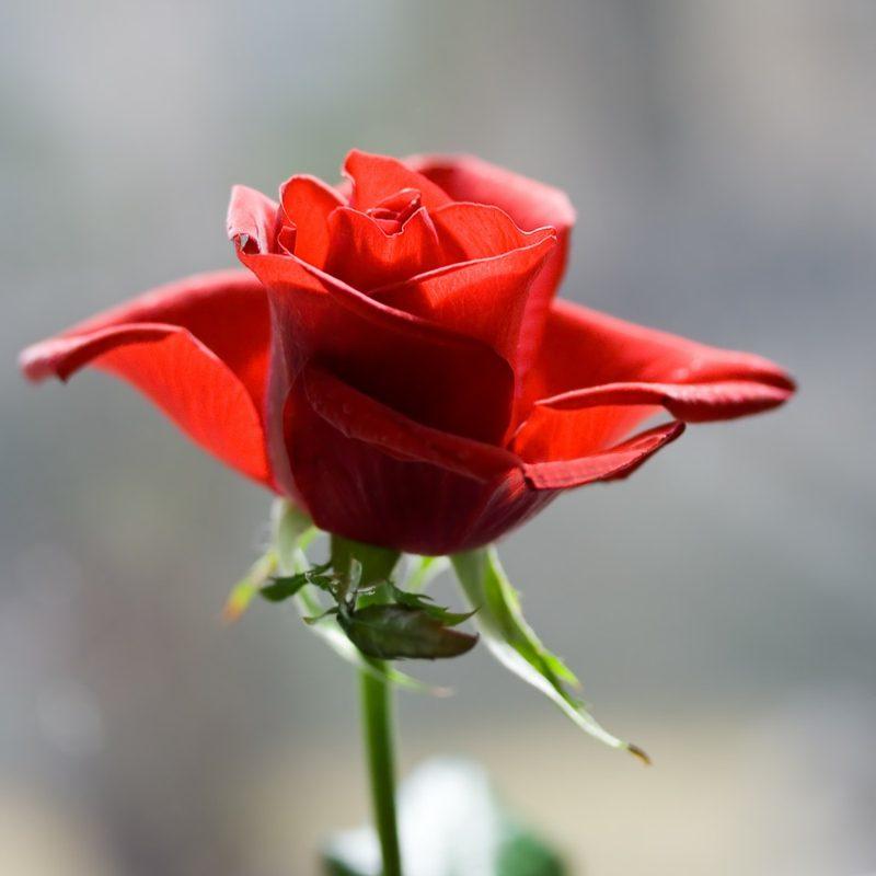 Alchemie Blume Eros-Prinzip