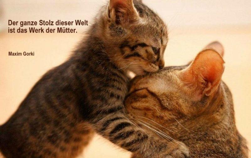 Gedichte und Sprüche zum Muttertag Zitat von Maxim Gorki