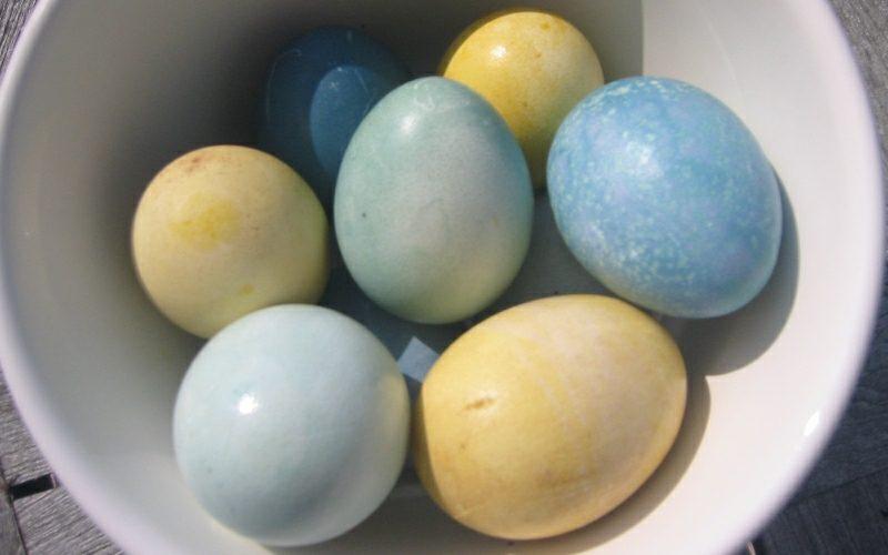 Ostereier färben mit Naturfarben Gelb und Blau