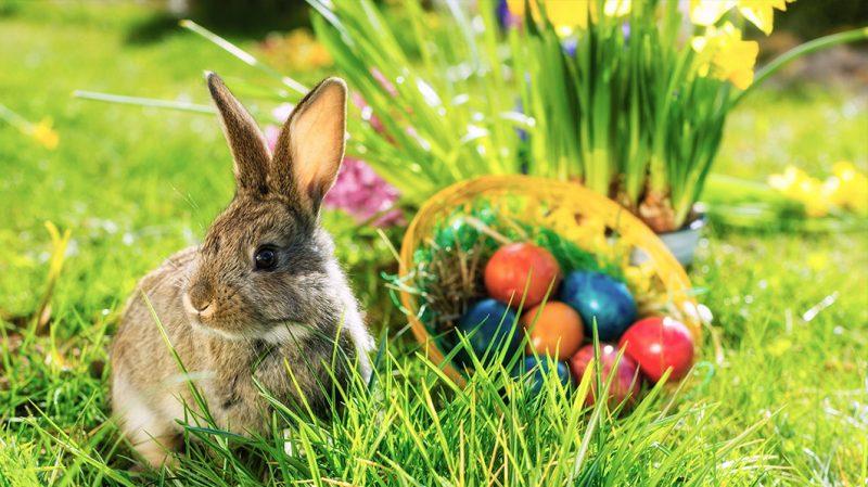 Wohnideen Ostern warum feiern wir ostern begriffe und symbole ostern frühling