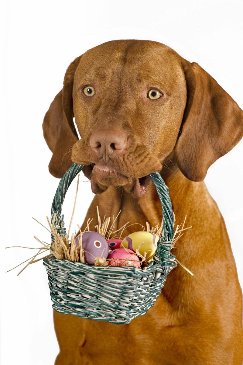 Ostern, das ist der Tag an dem laut dem biblischen Bericht, Jesus Christus von den Toten auferstanden ist