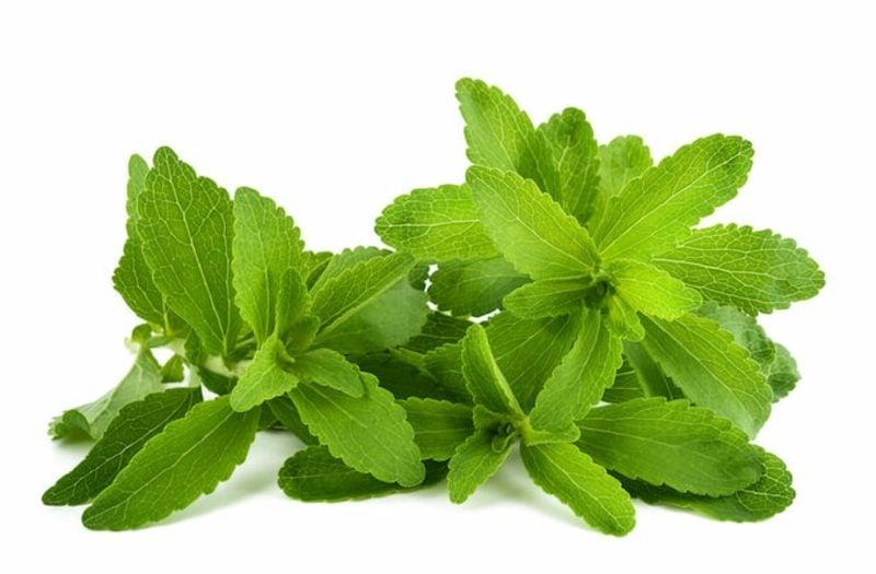 Stevia bio Pflanze Süssstoff