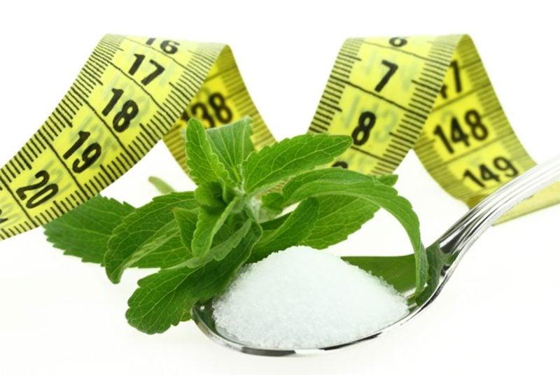 Stevia gesund keine Kalorien schnell abnehmen