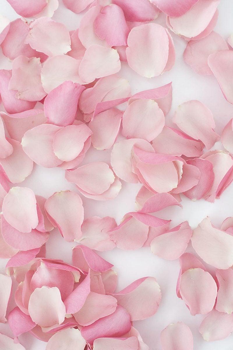 Papierblüten-Wand mit Rosenblüten - Anleitung in 3 Schritten