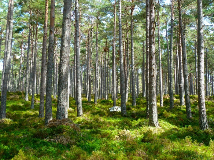 ein schöner grüner Wald