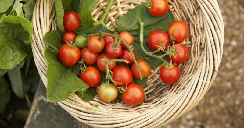 Cherry Tomaten gesund