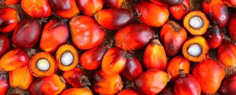 Ӧlpalme Früchte Palmöl Naturprodukt