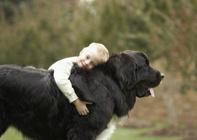 größte Hunderasse Neufundländer