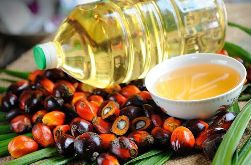 Palmöl Konsum Einfluss auf die Gesundheit