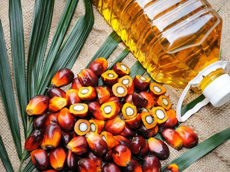 ist Palmöl gesund