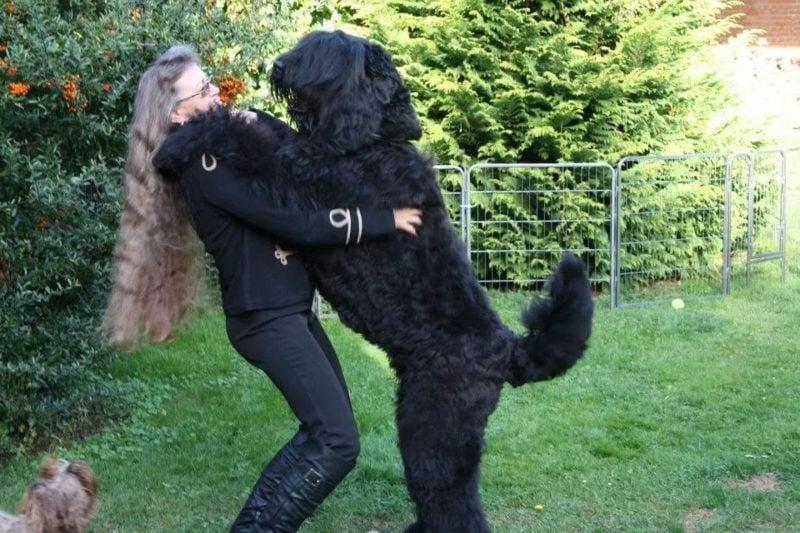 groβe Hunderassen Schwarzer Terrier