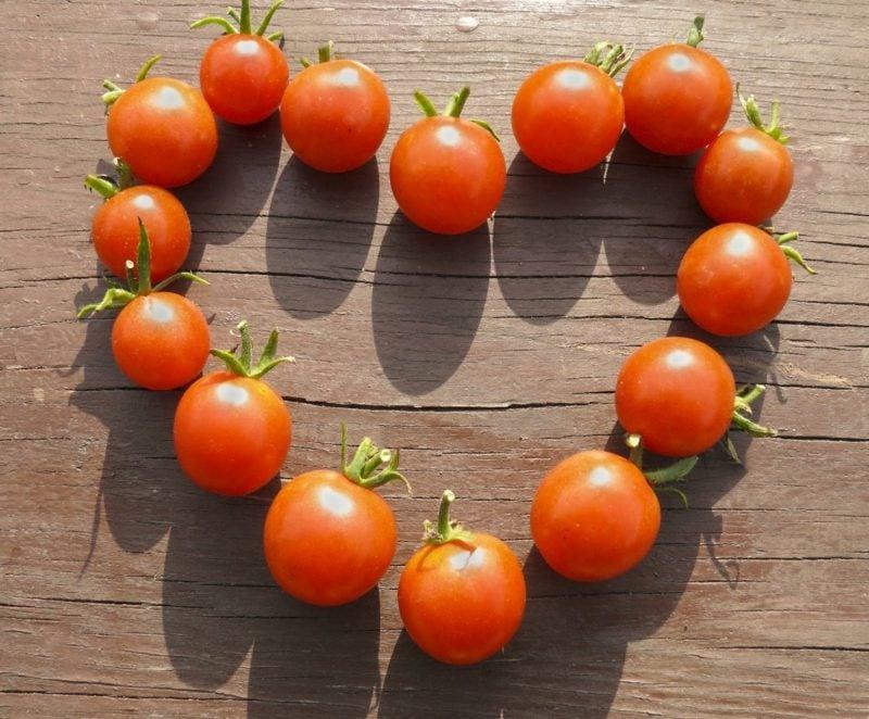 Tomatensoβe kochen Zutaten